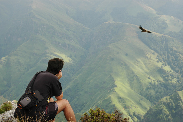 Birding at Pyrenees. Birds and beautiful landscapes